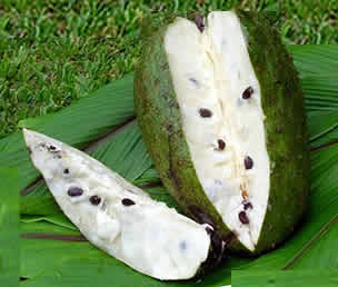 Guyabano used in folk medicine. Guyabano has been used worldwide as ...